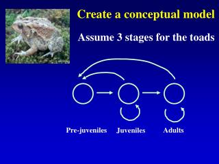 Create a conceptual model