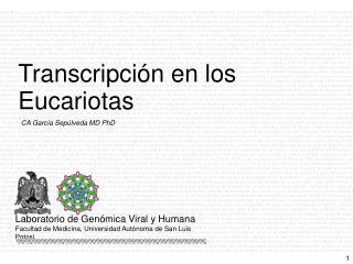 CA García Sepúlveda MD PhD