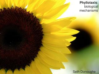 Phyllotaxis : biological mechanisms