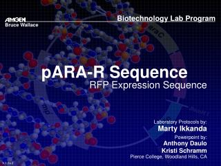pARA-R Sequence