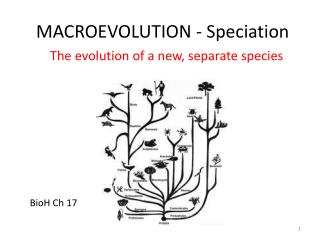 MACROEVOLUTION - Speciation