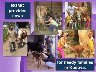 BGMC provides cows