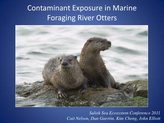 Contaminant Exposure in Marine Foraging River Otters