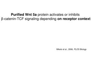 Purified Wnt 5a  protein activates or inhibits
