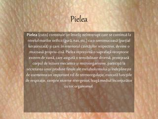 Pielea