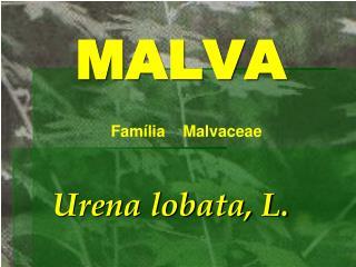 MALVA