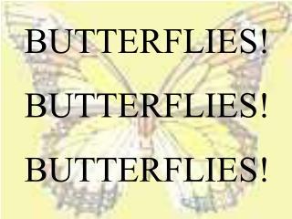 BUTTERFLIES! BUTTERFLIES! BUTTERFLIES!