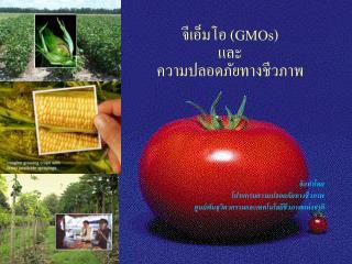 จีเอ็มโอ  (GMOs) และ ความปลอดภัยทางชีวภาพ
