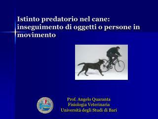 Istinto predatorio nel cane: inseguimento di oggetti o persone in movimento