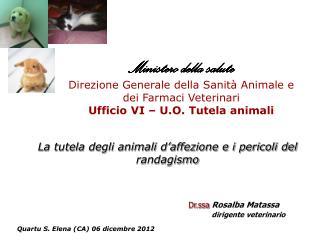 La tutela degli animali d'affezione e i pericoli del randagismo