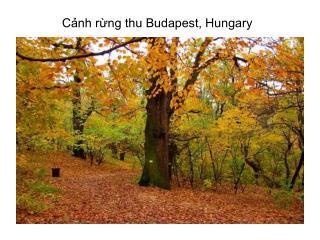 Cảnh rừng thu Budapest, Hungary
