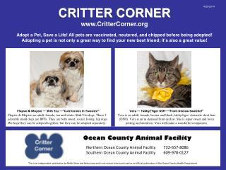 CRITTER CORNER CritterCorner