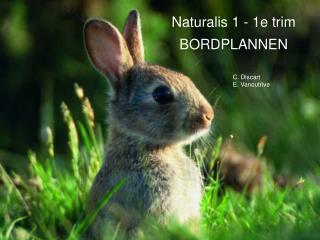 Naturalis 1 - 1e trim BORDPLANNEN