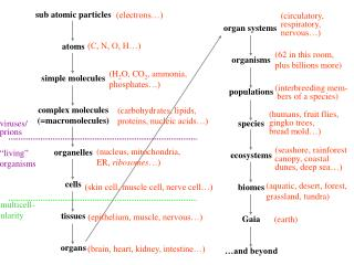 sub atomic particles atoms simple molecules complex molecules (=macromolecules) organelles cells