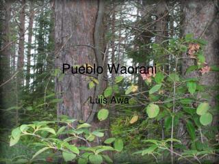 Pueblo Waorani
