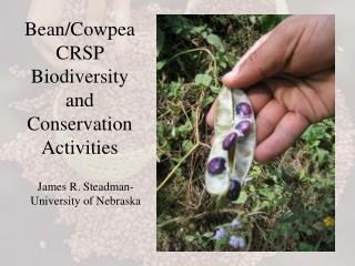 Bean/Cowpea CRSP Biodiversity and Conservation Activities