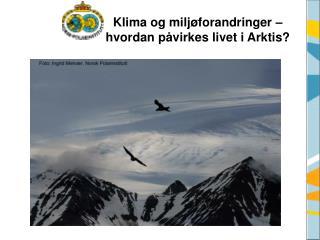 Klima og milj forandringer   hvordan p virkes livet i Arktis