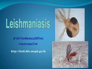 สำนักโรคติดต่ออุบัติใหม่ กรมควบคุมโรค beid . ddc . moph . go . th