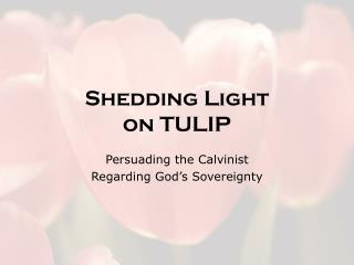 Shedding Light  on TULIP