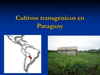 Cultivos transg nicos en Paraguay