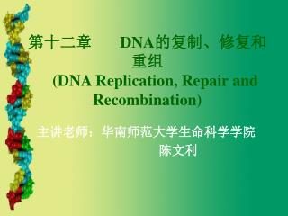 第十二章        DNA 的复制、修复和重组 (DNA Replication, Repair and Recombination)