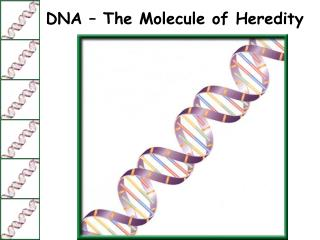 DNA – The Molecule of Heredity