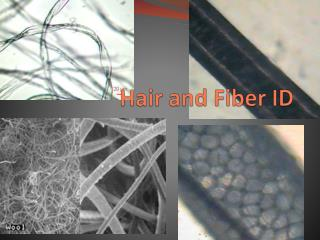 Hair and Fiber ID
