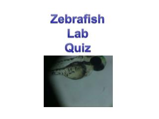 Zebrafish Lab  Quiz