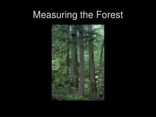 Measuring the Forest