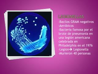 Legionellas
