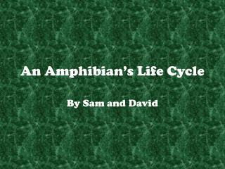 An Amphibian's Life Cycle