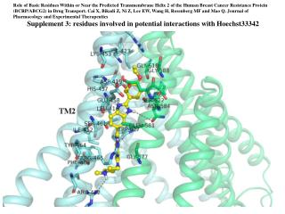 Supplement 3: residues involved in potential interactions with Hoechst33342