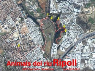 Els animals del riu Ripoll