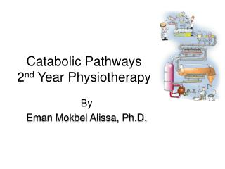 Catabolic Pathways 2 nd  Year Physiotherapy
