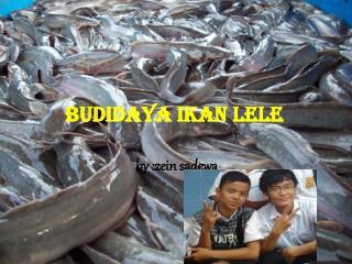 cara membudidayakan ikan lele
