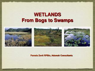 WETLANDS From Bogs to Swamps
