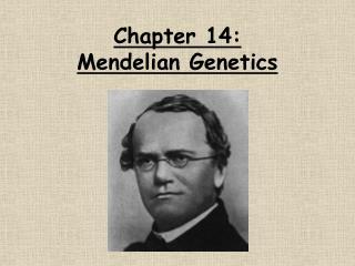 Chapter 14:  Mendelian Genetics