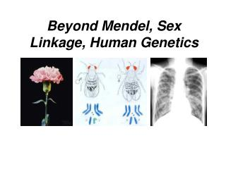 Beyond Mendel, Sex Linkage, Human Genetics