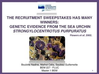 THE RECRUITMENT SWEEPSTAKES HAS MANY WINNERS:  GENETIC EVIDENCE FROM THE SEA URCHIN STRONGYLOCENTROTUS PURPURATUS