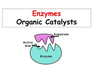 Enzymes are Proteins!