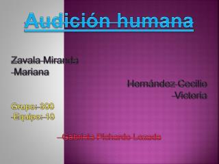 Audición humana Zavala Miranda  Mariana Hernández Cecilio  Victoria Grupo:  309    Equipo: 10