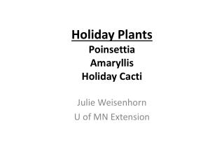 Holiday Plants Poinsettia Amaryllis Holiday Cacti
