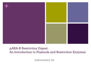 pARA -R Restriction Digest: An Introduction to Plasmids and Restriction Enzymes