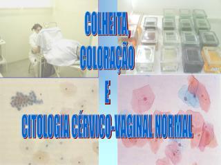 COLHEITA, COLORAÇÃO E CITOLOGIA CÉRVICO-VAGINAL NORMAL