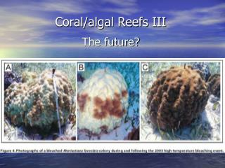 Coral/algal Reefs  III