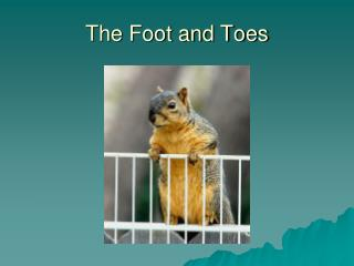 The Foot and Toes