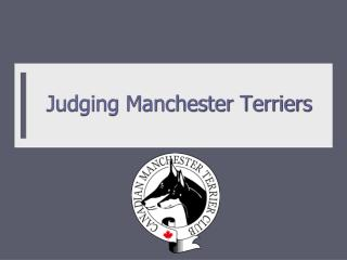Judging Manchester Terriers