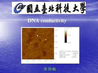 DNA  conductivity