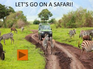 LET'S GO ON A SAFARI!