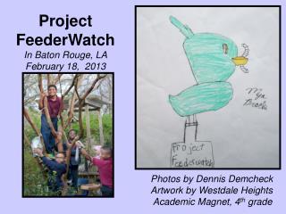 Project FeederWatch  In Baton Rouge, LA February 18,  2013